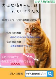 2020猫フィラリアチラシ.png